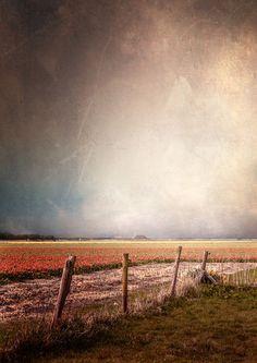 'tulip blossom' von Vera Kämpfe bei artflakes.com als Poster oder Kunstdruck $20.79