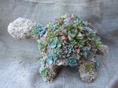 Succulent Turtle: The succulent turtle ($70) is the succulent version of the Chia Pet.