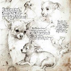 Chihuahua ENGLISH full new-1000x1000.jpg (1000×1000)