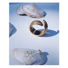 Ring Shells Palermo