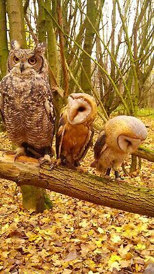 Owls---One of these is not like the others??