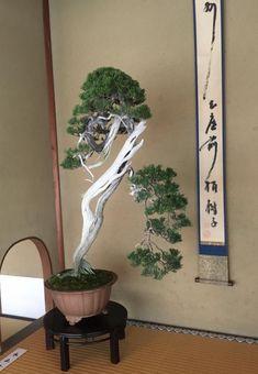 Multi Headed Monster & Other Brilliant Bonsai | Bonsai Bark