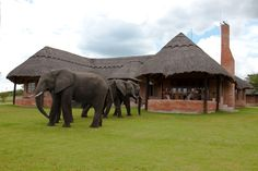 Self Catering Self, Elephant, Catering, Park, Animals, Animales, Animaux, Elephants, Parks