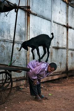 Man performs with his goat, Mumbai, India, 2010 by Steve McCurry We Are The World, People Around The World, Steve Mccurry Photos, Vivre A New York, Les Philippines, World Press Photo, Afghan Girl, Picture Stand, Contemporary Photography