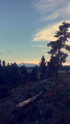 Camping out in the Pike National Forest #camping #hiking #outdoors #tent #outdoor #caravan #campsite #travel #fishing #survival #marmot http://bit.ly/2wdRLHX