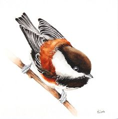 ARTFINDER:  Tit- bird, birds, animals, wildlife ... by Karolina Kijak - Original watercolors of Tit Paper 300g  100% cotton, high quality pigments size 18x18cm  Follow me on facebook: https://www.facebook.com/kijakwatercolors