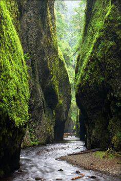 One of the most gorgeous places on earth- a favorite day hike during our Oregon days. Miss this place. Oneonta Gorge \\ Zack Schnepf