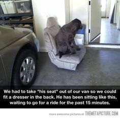 """We had to take """"his seat"""" out of our van so we could fit a dresser in the back. He has been sitting like this, waiting to go for a ride for the past 15 minutes."""