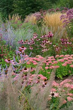 """Prairie Planting"" Russian Sage, Echinacea, Sedums and Grasses"