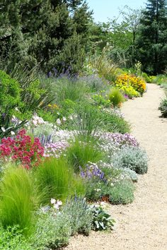 Beautiful Xeriscape Landscaping Colorado & 60 Great Ideas for Your Garden Xeriscape Front Yard, Plants, Colorado Landscaping, Xeriscape Landscaping, Garden Design Plans, Garden Planning, Mediterranean Garden, Dry Garden, Australian Garden Design