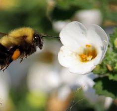 Busy Bee                                                                  Photo by Betty J Budd