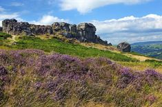 Ilkley Moor is part of Rombalds Moor, the moorland between Ilkley and Keighley in West Yorkshire, England. The moor, which rises to 402 m ft) above sea level is famous walking destination.