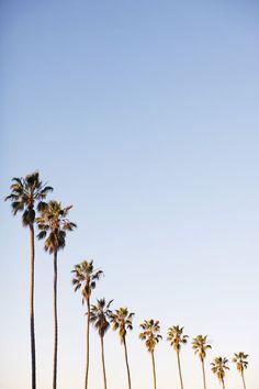 summer | palm trees | line em up