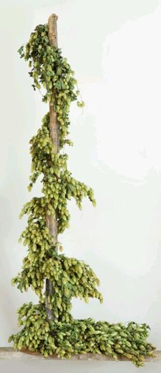 Hops a natural garland