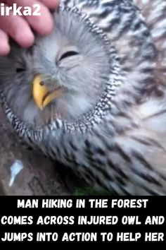 A usual hike to the forest to pick some mushrooms in Slovenia turned out to be a rescue trip instead. This man saw an owl sitting on a tree motionless, and when he discovered that the owl needs help, he immediately jumped into action to save and help her.