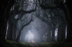 500px / Avenue of secrets by Heiko Gerlicher