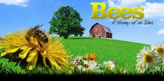 """Bee """"virtual"""" museum c/o Canadian Heritage Information Network (CHIN). Animal Science, Virtual Museum, Nature Study, Bee Keeping, Great Photos, Science Nature, Lesson Plans, Honey, Activities"""