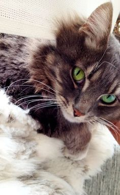 The Enchanted Cove - Pippin the Tux / Here Kitty Kitty… Cute Cats And Kittens, Cool Cats, Kittens Cutest, I Love Cats, Pretty Cats, Beautiful Cats, Animals Beautiful, Pretty Kitty, Gorgeous Eyes