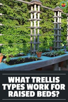 A raised bed trellis is not just a good idea, it can be an absolute necessity. We discuss different trellises that you can use in raised beds!