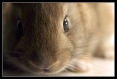 Bunny by ~medveh on deviantART