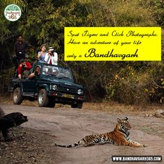 Spot #Tigers And Click Photographs Have An #Adventure Of Your Life Only A #Bandhavgarh.