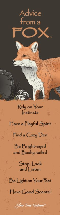"""""""Rely on your Instincts."""" Gather Advice from a Fox. yourtruenature.com"""