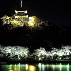 Naka-ku Yokohama-shi Kanagawa. Sankei-en garden. Cherry blossoms by night.  三渓園のランドマーク!  #神奈川県#横浜市#中区 #三渓園#夜桜 #jp_gallery #icu_japan #wu_japan #gf_japan #jp_views2nd #wow_nihon #japanfocus #ig_nippon #ig_japan #IGersJP #Loves_Nippon #team_jp #igs_asia #eosm10_spring #jp_gallery_member#波止場写真部 #SnapTiger #スナップ寅さん #icu_nightlife #ptk_night #noitenoinstagram #loves_night #ir_night #夜景倶楽部 by snap.tiger