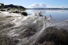 Millions Of Spiders Fleeing Floods Embellish Land With Spectacular Webs