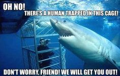 Don't worry little buddy! Mr. Shark is here to help.--- LOL
