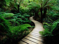 Winding pathway.