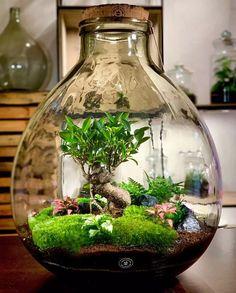 Terrarium Scene, Build A Terrarium, Bottle Terrarium, Small Terrarium, How To Make Terrariums, Bottle Garden, Terrarium Plants, Succulent Terrarium, Indoor Water Garden