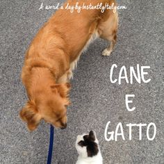 """""""Dog and Cat"""" 