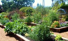 How do we get the most produce out of our small garden spaces?