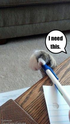 The summarization of pens in a cat household.