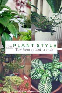 Plant Style - Top houseplant trends are here! Check them out on the blog today. Simple Way, Houseplants, Indoor Plants, Greenery, Trends, Color, Check, Tops, Medium