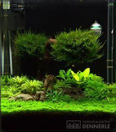 Aquarium moss balls