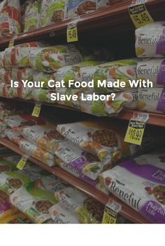 Find out if your cat food company deals with foreign fisheries using slave labor: Food Company, Homemade Dog Food, Dog Eating, Cat Food, Dog Food Recipes, Cats, Healthy, Homemade Food, Cat Feeding