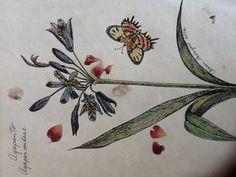 Agapanto y mariposa sobre papel natural con pétalos de rosas