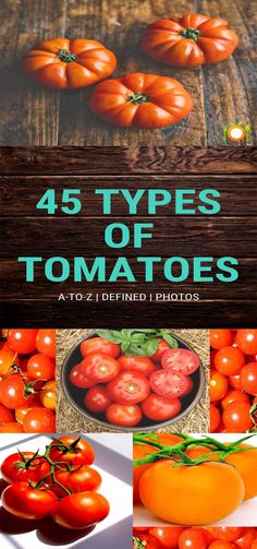 45 Kinds of Tomato Cultivars. Varieties of Tomatoes A to Z. Photos of kinds of Tomatoes with Definition.