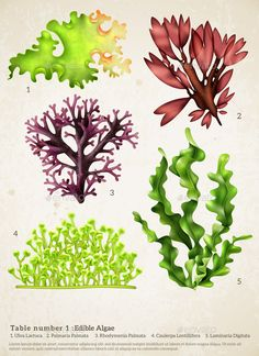 Buy Sea Weed Realistic Collection by macrovector on GraphicRiver. Realistic seaweed set with images of different underwater plants with biology text captions on paper background vecto. Underwater Plants, Underwater Painting, Sea Life Art, Sea Art, Fish Under The Sea, Underwater Background, Graffiti, Sea Plants, Plant Drawing
