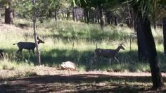 Wildlife we see while working in Flagstaff
