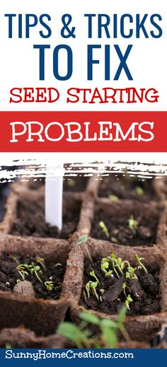 Having problems seed starting indoors? Check out these solutions and tips to fix seedlings and other problems from starting seeds indoors. Easy fixes for beginner gardeners. #seedstarting #seedstartingproblems #seedlings #gardening #beginnergardener When To Plant Garden, Garden Plants, Floor Cleaners, Beginners Gardening, Starting Seeds Indoors, Seed Packaging, Childrens Artwork, Plant Labels, Garden Seeds