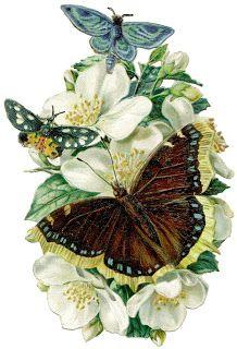 Antique Passion-Láminas Antiguas,Vintage,Retro...y manualidades varias: Y también mariposas...