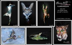 FLORIDA WILDLIFE - Shannon Holt / (Set of 6 Prints)