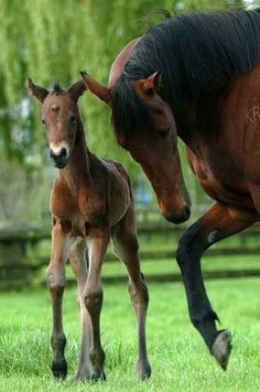 Horse watching their firstborn