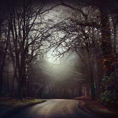 Dreaming of Wolves II by nina-Y.deviantart.com on @deviantART