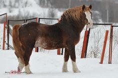 stallion Lazurnyj
