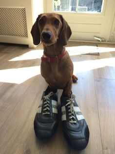 Bikkembergs shoes. Nice design but not as comfortable as converse. Bought them 1,5 year ago. My dog does like them!