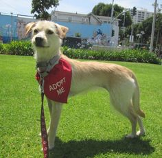 Hula is a 9 month-old, 12 lb. terrier mix who loves to go for long walks with her person.
