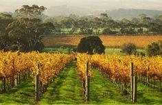 McLaren Vale vineyards in autumn